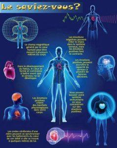 champs eletro magnetique du coeur