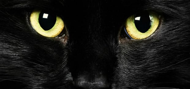regard magnétique du chat noir