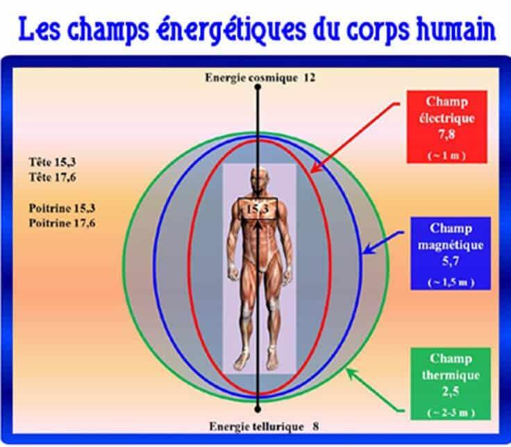les champs énergétiques du corps humain