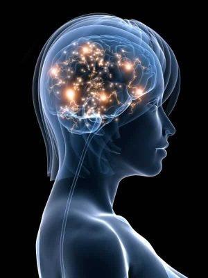 harmonie des 2 hemispheres du cerveau